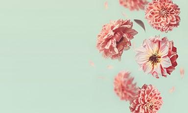 Blumen-Banner-mittel-unten